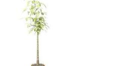 Pot盆栽035