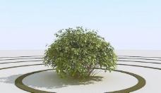 高精细灌木丛模型 bush 01