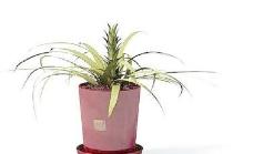 Pot盆栽038