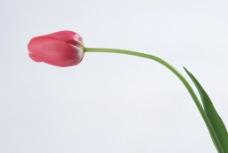花卉植物摄影图片