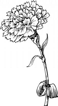 康乃馨盛开时简笔画步骤图 画法