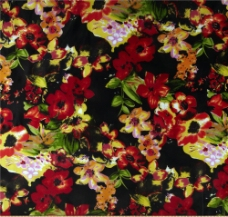 位图 植物 花朵 免费素材