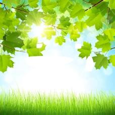 夏季树叶背景图
