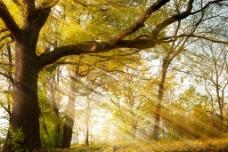 阳光下的树图片