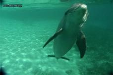 海中自由海豚