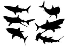 鲨鱼设计图