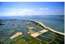 东海岛对虾养殖基地鸟图片