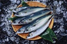 海鲜高清摄影图片