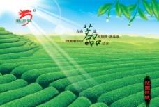 茶展板海报图片