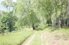 在绿色森林的小路
