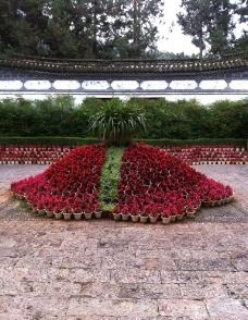盆栽鲜花景观图片