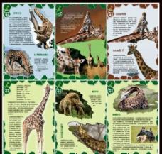 长颈鹿海报图片