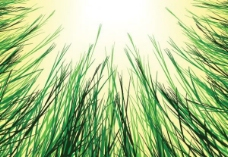 在太阳矢量背景草