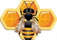 详细的三维蜜蜂蜂巢图标