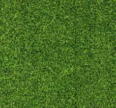 郁郁蔥蔥的綠色草的紋理背景