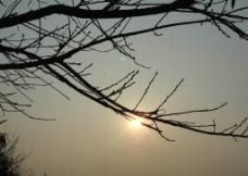 枯藤老树图片