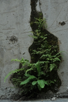 青苔 苔藓图片