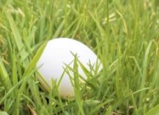 鸡蛋在草地背景