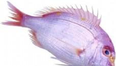 海鲜鱼类PSD源文件 4
