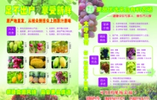 葡萄宣传单图片