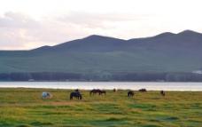 美丽的牧场图片
