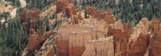 丘陵 树林图片