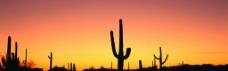 仙人掌 黄昏 夕阳图片