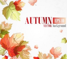 秋天的美丽背景矢量集03