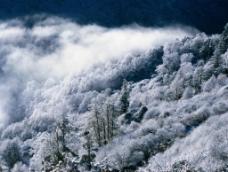 冰树雪景图片