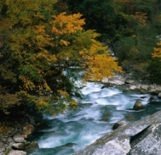秋日溪畔图片