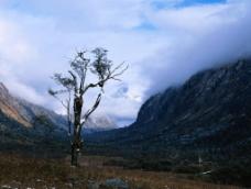 冰山枯树图片