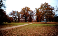 秋日景色图片