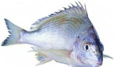 海鲜鱼类PSD源文件 1