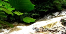 山溪水图片