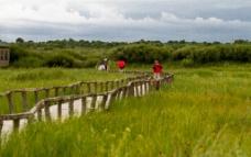 达里湖湿地图片