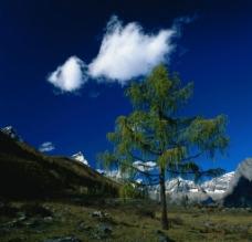 雪山独树图片