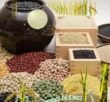 各种豆类设计海报