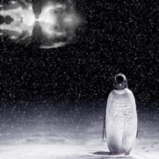 企鹅设计素材模板