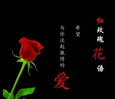 玫瑰花语大全
