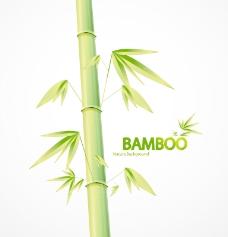 竹的自然背景