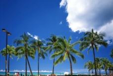 海边树图片
