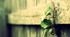 绿叶壁纸图片