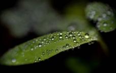 绿叶子图片