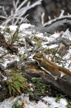 峨眉山 松鼠图片