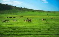 草原马群图片