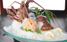 澳洲龙虾图片