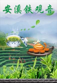 安溪铁观音茶