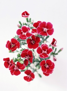 鲜艳红花图片