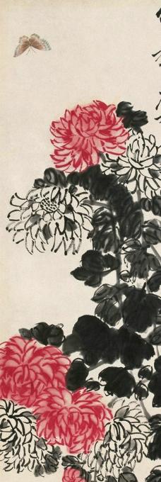 菊花蝴蝶图片