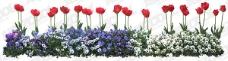 园林花卉花丛PSD素材 12